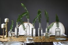 Ferns in bottles