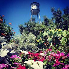 Summer day in Gruene, TX