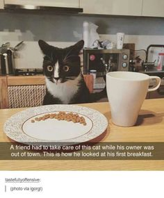Breakfast? But where is mine? My dish is empty! Where is my water? I don't drink from a glass!
