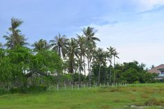 Thailand Real Estate - Land For Sale in Cha-am 500 M from the Beach Price:  2,139,000 THB - Tax Included  http://www.ansthailandrealestate.com/cha-am-land-637.html
