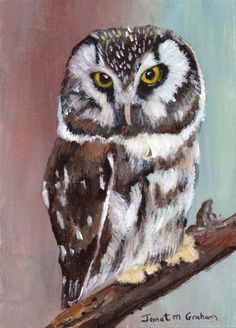 """Daily Paintworks - """"Boreal Owl ACEO"""" by Janet Graham"""