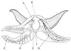 Worksheet Biology Corner Worksheets frogs anatomy and worksheets on pinterest