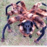 Giant Spider 🕷 dog 🐕 😂😂 Credit: SA Wardęga https://www.youtube.com/channel/UCdZwMpK-iWqCos46xPscDeg