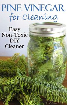 Like the smell of pine cleaners but don't like chemicals? Evergreen Scented Vinegar is an Easy DIY Cleaner made from fresh pin needles and vinegar. Get the full directions & learn how to make your own evergreen scented vinegar for cleaning, uses for vinegar, vinegar uses, cleaning vinegar #Greenclean #DIY
