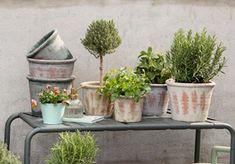 Tipps zum Anlegen eines urbanen Gartens