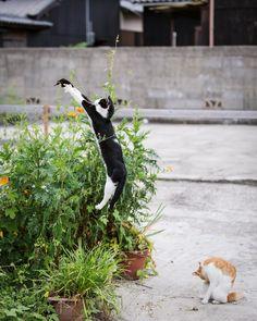 cat ♥ jump