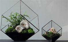Two of Ken Martens terrariums