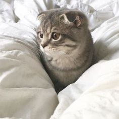 These pretty cats will warm your heart. Cats are fascinating creatures. I Love Cats, Crazy Cats, Cute Cats, Funny Cats, Animals And Pets, Baby Animals, Funny Animals, Cute Animals, Pretty Cats