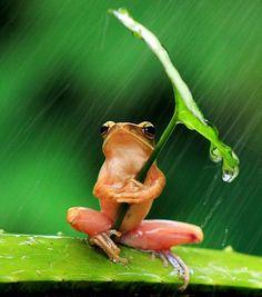 Sólo una rana con paraguas