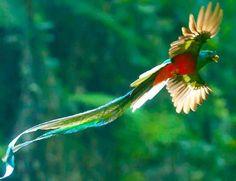 Quetzal ..the beautiful, mystical bird