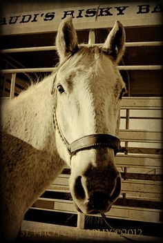 Western Horse Fine Art PhotographyTexas Rustic by 3LPhotography