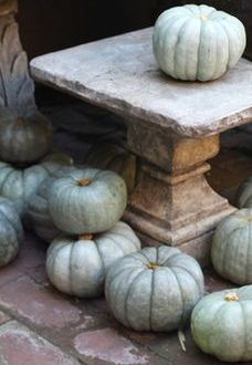 It's almost time to pick a pumpkin! Welcome to the first day of Fall. I love the Fall displays and folliage at this garden center located in Corona Del Mar, California. Thanksgiving Decorations, Seasonal Decor, Thanksgiving Crafts, Samhain, Autumn Rain, Autumn Decorating, Decorating Ideas, Decor Ideas, White Pumpkins