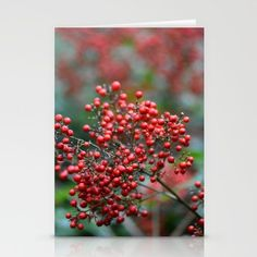 Wild Red Berries in Autumn Digital Photograph Stationery Cards by Fold Envelope, Canvas Prints, Art Prints, Latest Generation, Red Berries, Card Stock, Stationery, Greeting Cards, Blank White