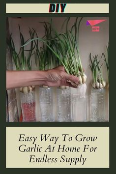 Growing Herbs, Growing Vegetables, Bucket Gardening, Gardening Tips, Household Plants, Home Vegetable Garden, Container Gardening Vegetables, Herbs Indoors, My Secret Garden