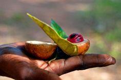 Zanzibár, a fűszersziget