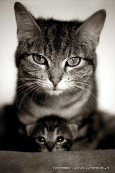 My precious u hear me humans mine