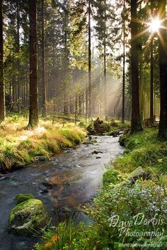 Illumination Forest, Harz, National Park
