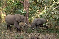 Gajahnya kekecilan