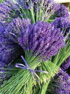 Kytice levandule Bouquet of lavender Lavender Cottage, French Lavender, Lavender Blue, Lavender Fields, Lavender Flowers, Purple Flowers, Beautiful Flowers, Lavander, Purple Love