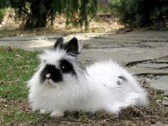 15 Adorable Lionhead Rabbits
