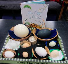 Children will learn that bird eggs can be different in color, size, and shape. They will also learn that eggs need to be handled with great care.