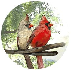 Cardinals are one of the most classic types of bird images we have all come to know and love. #windowfilmworld #windowfilm #screendoormagnets #homedecor #homedesign