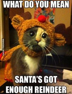 cat dressed up as a reindeer looks like something I would dress my cat up in