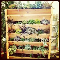 32 Reasons Succulents Are The Best Plants Ever  http://www.buzzfeed.com/alannaokun/reasons-succulents-are-the-best-plants-ever