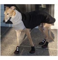 """by Barko Booties - Winter Traction Dog Boots Ron is wearing Pawtrexx snow boots. Mom says """"they are a Godsend for a Greyhound"""".Ron is wearing Pawtrexx snow boots. Mom says """"they are a Godsend for a Greyhound"""". Dog Snow Boots, Winter Boots, All Dogs, I Love Dogs, Deaf Dog, Personalized Dog Collars, Dog Safety, Dog Rules, Italian Greyhound"""