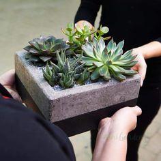 Indoor Plants Online, Buy Plants Online, Stone Planters, Glass Planter, Succulent Gifts, Succulent Terrarium, Planting Succulents, Planting Flowers, Gifts Dubai
