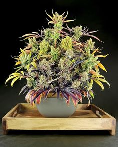 Aquaponics Home Aquarium Code: 9809279723 Marijuana Plants, Weed Plants, Weed Pictures, Weed Pics, Cannabis Cultivation, Weed Art, Dibujo, Ideas, Medical Marijuana