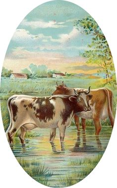 antique cows, very pastoral