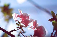 Nature - Personal @ronaldoichi  Portraits @ronaldoichiphotography - #nature #natureza #naturephotography #photography #fotografia #plants #garden #vsco #ronaldoichi #vscofilm #instagramers #摄影 #色彩 #カメラマン #フォトグラフィー #写真 #自然 #植物 #nature2012