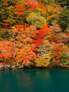 Someday I'll go back and I hope it's when the Siberian Swans are migrating :) What A Wonderful World, Wonderful Time, Lake Towada, Aomori, Autumn Scenery, Autumn Colours, Fall Harvest, Asia Travel, Wonders Of The World