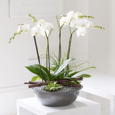 This planted arrangement is in the style of a Japanese Zen garden.