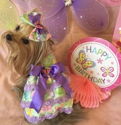 Peaches Yorkie Peachy Girl LLC 5th birthday Girls World, 5th Birthday, Peaches, Well Dressed, Yorkie, Cute Outfits, Pretty Outfits, Yorkies, Peach