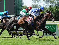 Summer Front(2009)War Front- Rose Of Summer By El Prado) Gets Up Late To Win The Grade 3 2012 Hill Prince Stakes At Belmont Park.