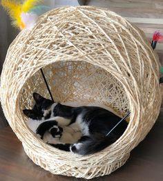 I Love Cats, Cool Cats, Sisal, Cat Perch, Diy Dog Bed, Cat Room, Pet Furniture, Cat Accessories, Cat Crafts