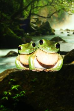 (Is it just me? Or are they smiling ) * * ' WEEZ SMILIN'. WE  HAZ OUR OWN SWAMP ANDS EACH OTHER. IT BE A GOOD LIFE. RIBBIT.""
