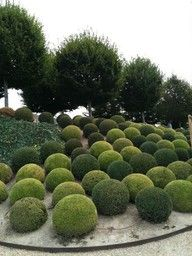 Garden topiary never goes out of style. Topiary creates structure, formality and sculptural focal points in a garden much like a work of art. These garden designs are a perfect example of topiary b… Boxwood Garden, Topiary Garden, Boxwood Topiary, Garden Art, Garden Design, Garden Balls, Formal Gardens, Outdoor Gardens, Landscape Architecture