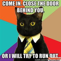 business cat run out