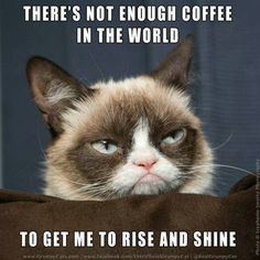 Need some more #coffee #grumpycat