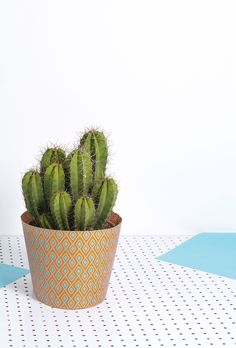#cactus #wrapping #fun #gift #evaenanne