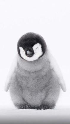 Olla söpö Yes väsynyt – Baak Turn Animals Baby Animals Super Cute, Cute Little Animals, Cute Funny Animals, Cute Dogs, Baby Animals Pictures, Cute Animal Pictures, Gif Pictures, Fluffy Animals, Animals And Pets