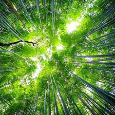 【kazuya1965】さんのInstagramの写真をピンしています。《#kyoto #arashiyama #bambooforest #bamboo #竹林 #milkyway #天の川 #嵐山 #天龍寺 #緑 #新緑 #天上 #空 #forest #林 #woods #japanesegarden #japan #日本 #竹》