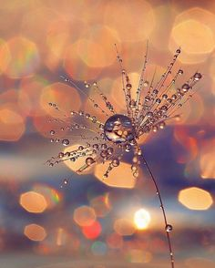 Solid Advice To Make Photography More Fun Pretty Pictures, Cool Photos, Fotografia Macro, Montage Photo, Water Art, Water Droplets, Macro Photography, Amazing Nature, Belle Photo