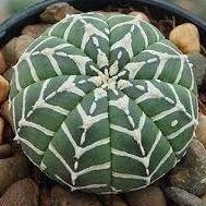 Growing Succulents, Cacti And Succulents, Cactus Plants, Garden Trees, Garden Pots, Cactus Farm, Succulent Landscaping, Succulent Pots, Beautiful Gardens