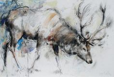 Red Deer Stag  by Lucy Newton