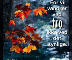For vi vandrer ved tro, ikke ved det synlige Holy Spirit, A5, Movie Posters, Movies, Bible Verses, Nature, Pictures, Holy Ghost, Films