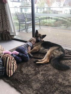 Rollo and Madison chilling We German Shepherds Whoodle Puppies For Sale, Puggle Puppies, Yorkie Puppy For Sale, Siberian Husky Puppies, Dogs And Puppies, Siberian Huskies, German Shepherd Photos, German Shepherd Puppies, German Shepherds